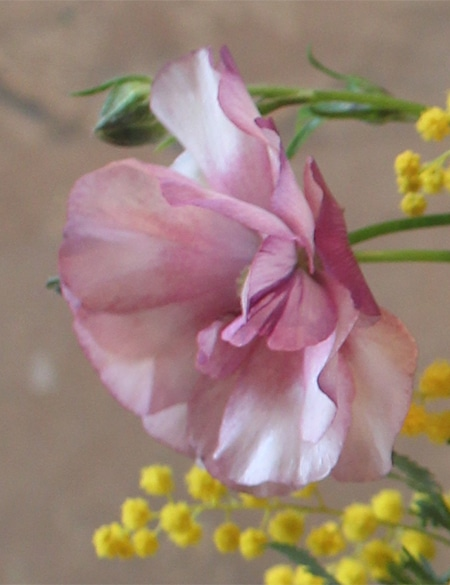 04-weekendflower-170316.jpg