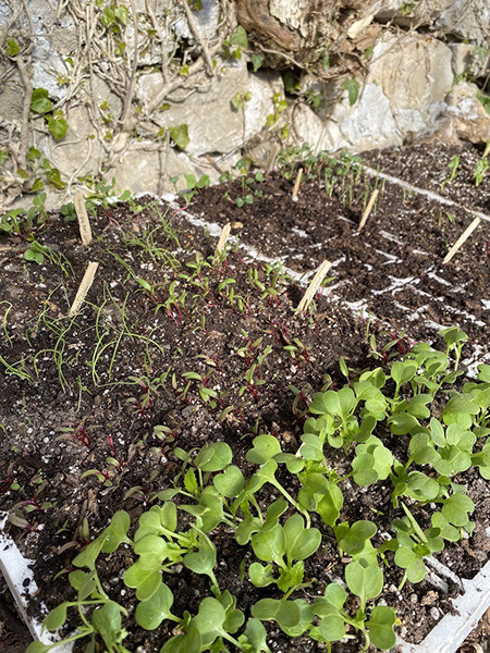 210427_15_compost_terriccio.jpg