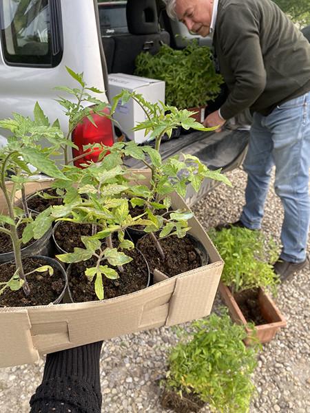 210531_24.pomodori di Paolo copia.jpg