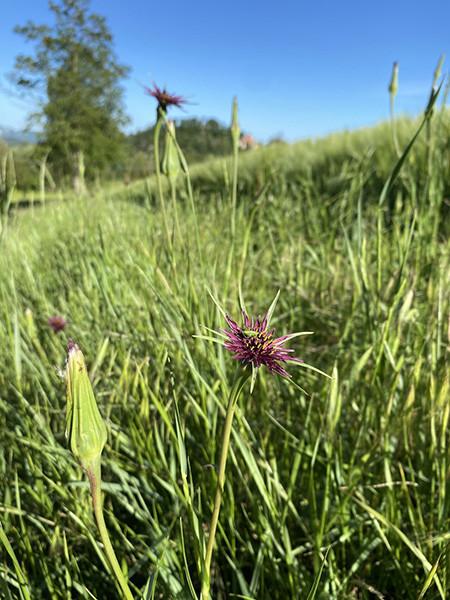 210531_6.fiori di campo3 copia.jpg