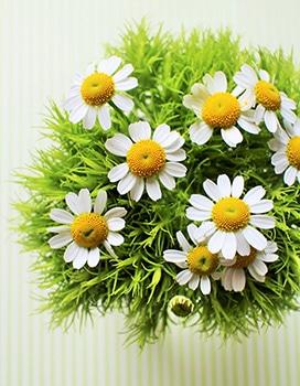 c06-weekendflower-150324.jpg