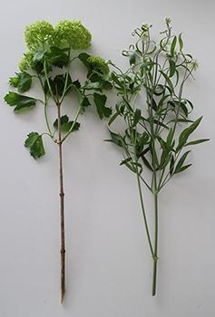 c03-weekendflower150428.jpg
