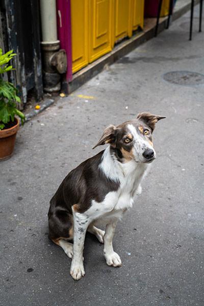 210921-dog-04.jpg