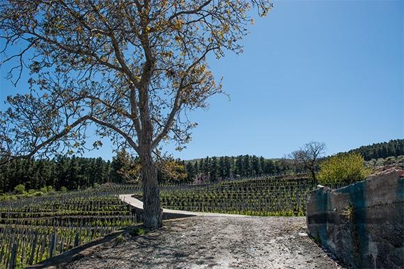 05-sicilia-wine-2-170623.jpg