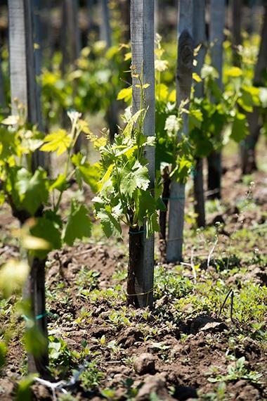 06-sicilia-wine-2-170623.jpg