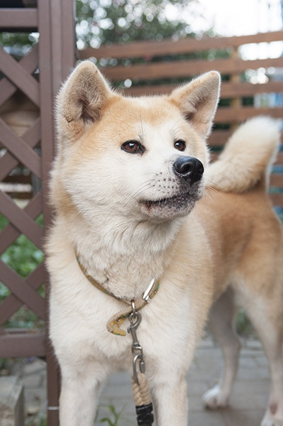 161227_japanese_dogs_01new.jpg