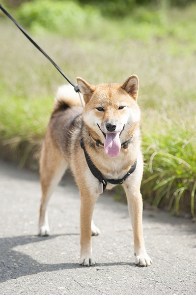161227_japanese_dogs_04new.jpg