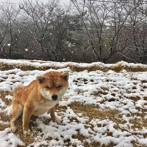 161227_japanese_dogs_07.jpg