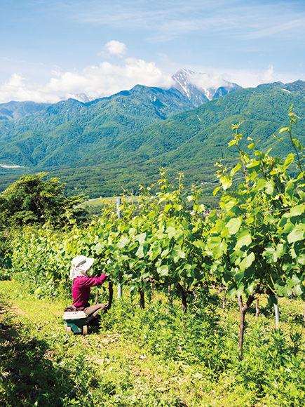八ヶ岳の自然をそのままボトルに詰めたようなワイン特集travel
