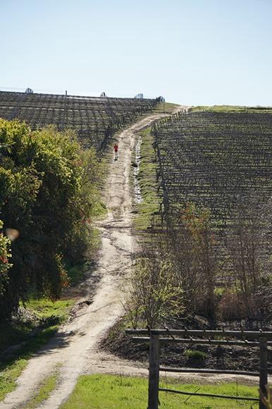 181213_south_african_wines_13.jpg