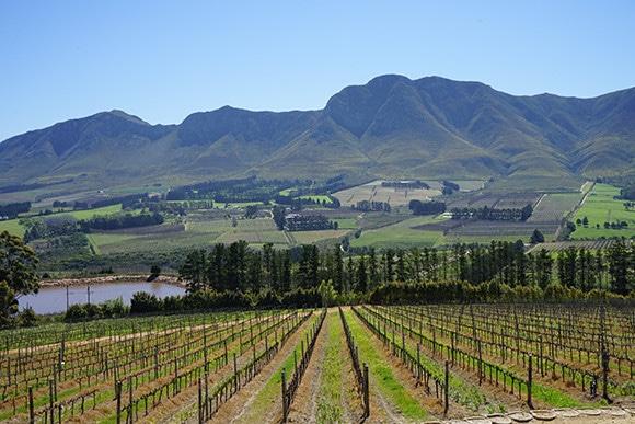 181214_south_african_wines_13.jpg