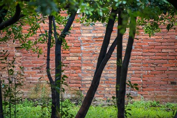 190305-VenizGarden-192_HD.jpg