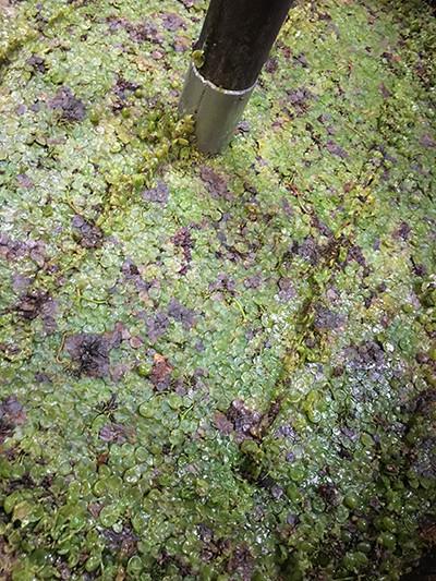 200331-vin-nature-4-14.jpg