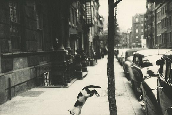17050817【4】《ペリー・ストリートの猫》 1949年頃 (1).jpg