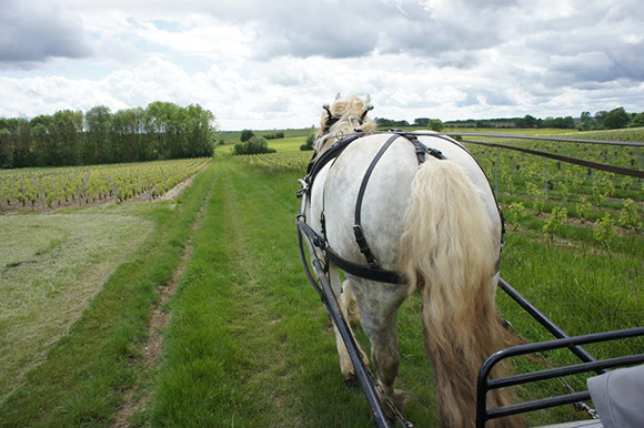 vin-nature-07-title-thumb-191127.jpg